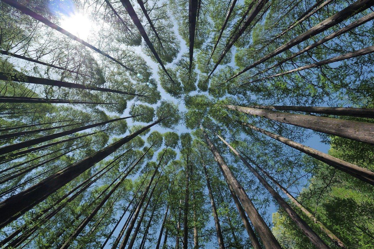 2000 arbres sont plantés chaque année par Artifica avec Reforest'action.